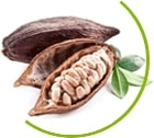 boabe de cacao ingredient principal chocolate slim